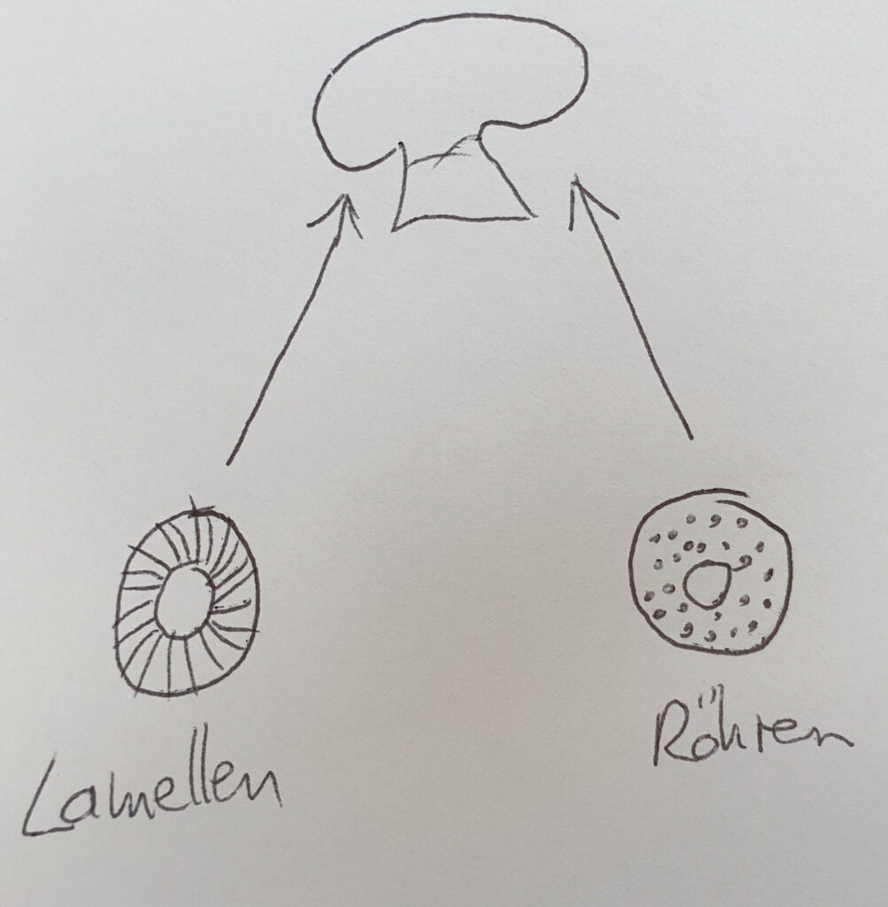 Lamellen- oder Röhrenpilz?